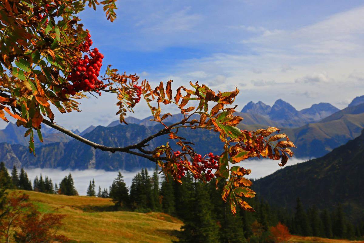 Der Herbst im Kleinwalsertal Hotel Erlebach.BB