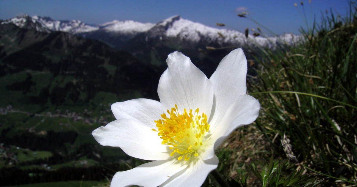 Frühling Hotel Erlebach Ifen Kleinwalsertal